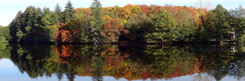 slider automne